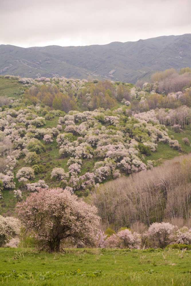 Tian Shan Fruit Forest © Dr Gayle Volk USDA