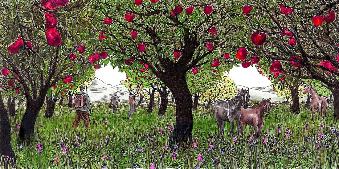 Naï Zakharia - Picking apples in the Tian Shan Fruit Forest - originally published in Emergence Magazine © the artist