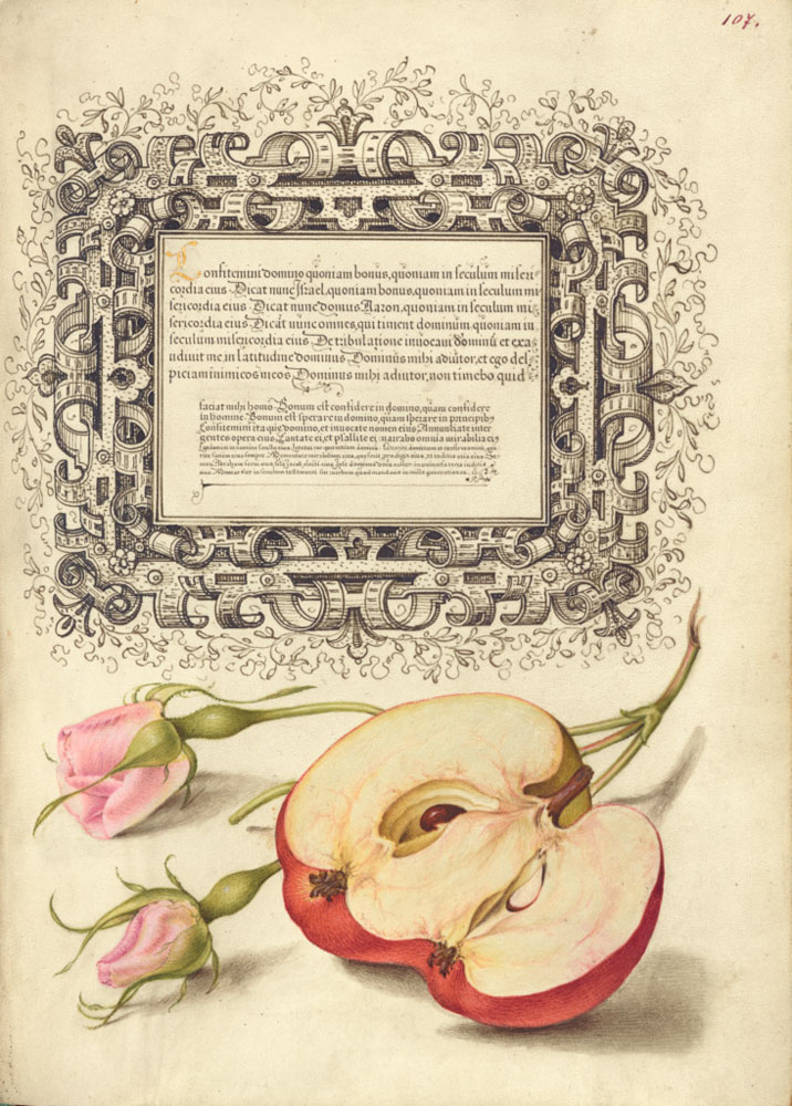 Georg Bocskay and Joris Hoefnagel - French Rose and Apple from Mira Calligraphiae Monumenta (1561–1596) © The J Paul Getty Museum