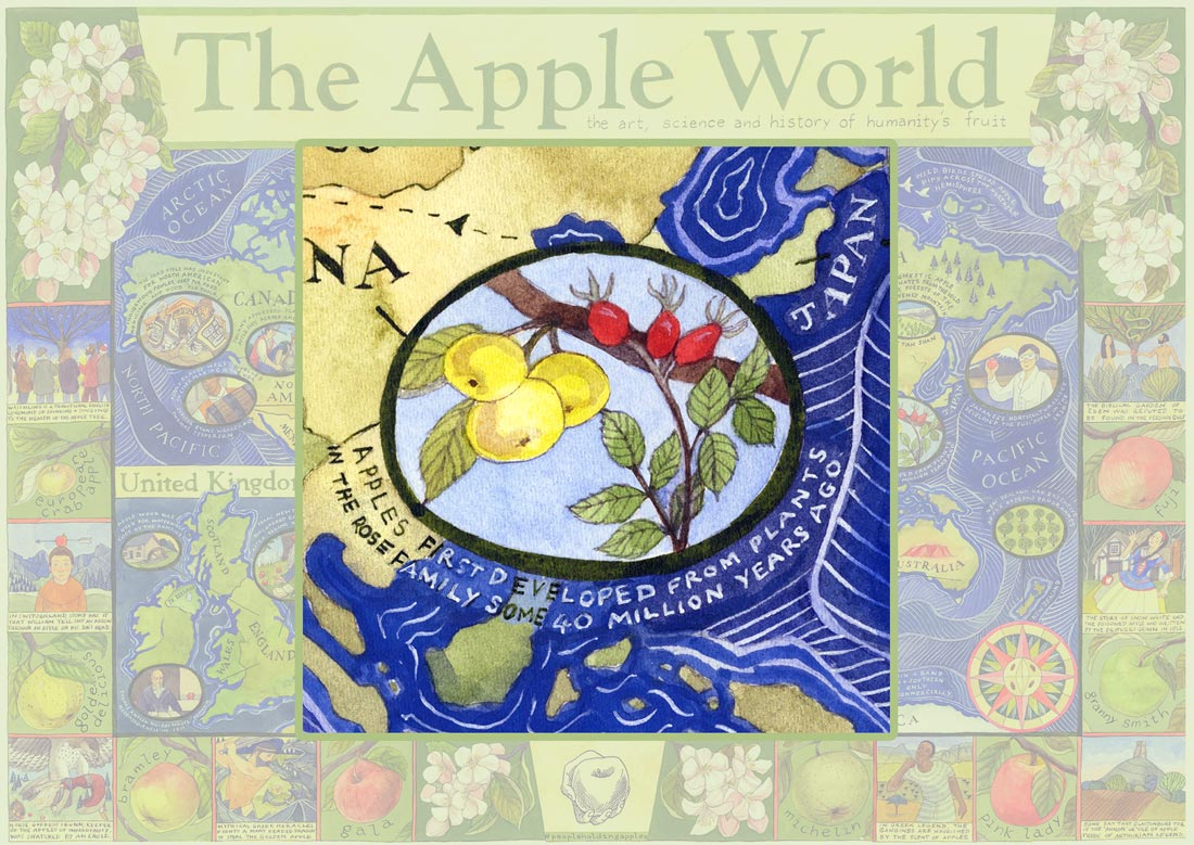 The Apple and the Rose