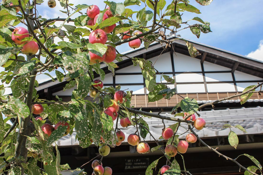 Toson Museum with red apples Image © Toson Memorial Museum