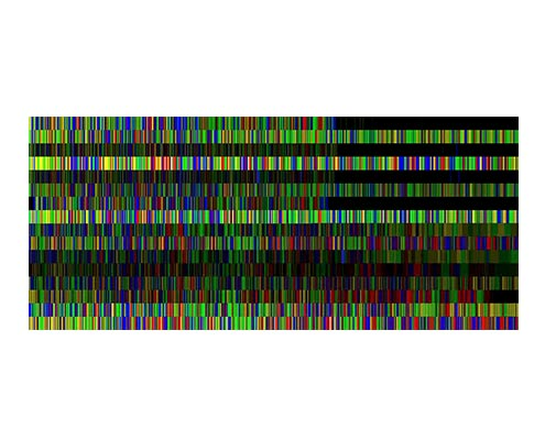 Part of an apple genome sequence © Nicola Busatto