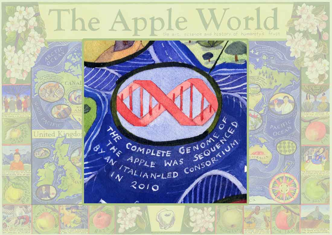 The Apple's Code of Life sequencing the apples' genome