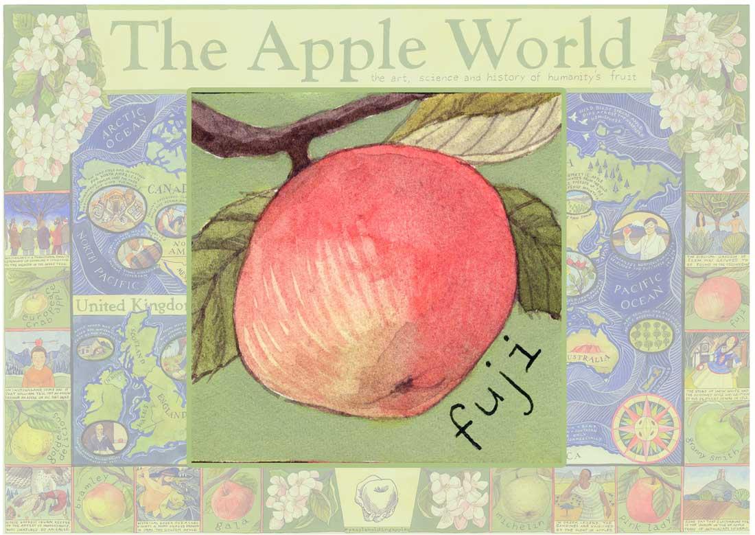 Apple Number One - Fuji