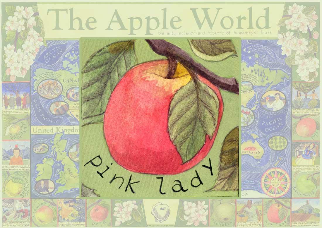 Apple World Map - Pink Lady