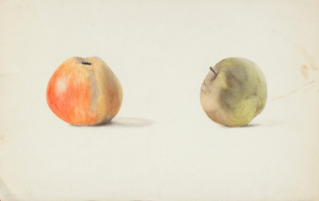 Agnes Mary Webster - Two apples 1870 - 1944 © Royal Academy of Arts London