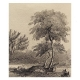 Apple tree at Woolsthorpe Manor, 1840, George Rowe after Thomas Howison, Drawing © The Royal Society