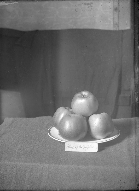 Fruit & Flower Show best dish of apples 1895 Alfred Watkins © Hereford Museum & Gallery, Herefordshire Museum Service