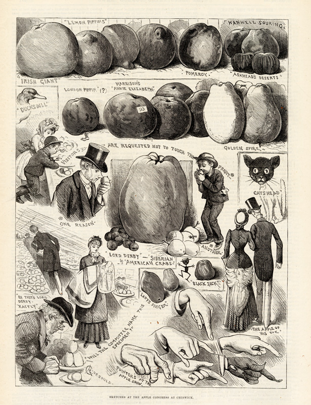 """Sketches """"from a jocular point of view"""" at the Apple Congress at Chiswick 20 October 1883 © Illustrated London News Ltd Mary Evans"""