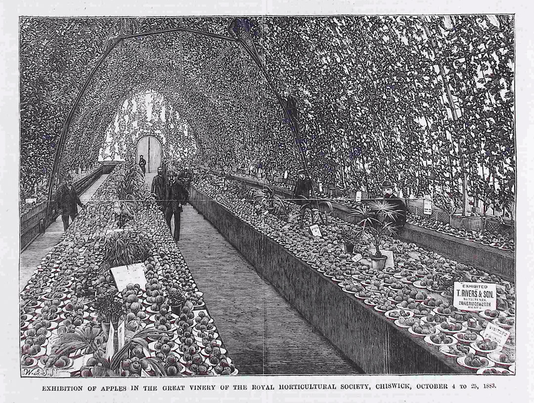 The National Apple Congress exhibition. The Gardeners Magazine Vol 26 20 October 1883 © RHS Lindley Collections